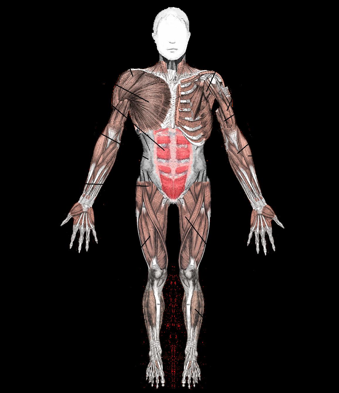 Arthritis, Muscle, Joint, injury, pain